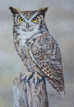 Horned Owl #2