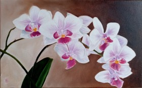 My Favorite Orchids