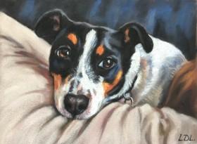 Jack Russell Pastel Dog Portrait
