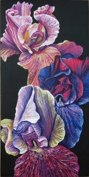 Irises Three