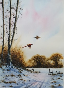 Late Afternoon Pheasants