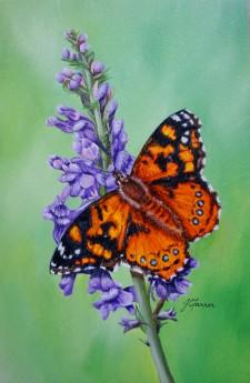 Painted Lady on PurpleToadflax