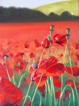 Poppy Fields near Blackstone in Bewdley.