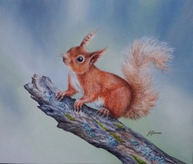Red Squirrel on Mossy Branch