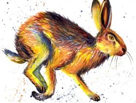 Splashy Hare