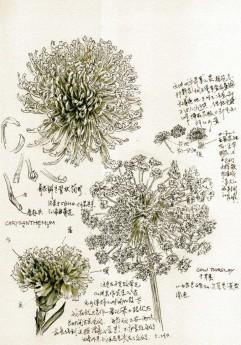 Study of Three Flowers