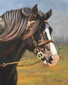 Welsh Cob Stallion Painting