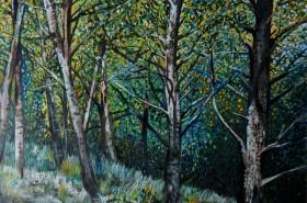 Woodlands 1